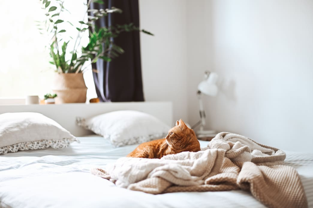 Linens 101: How to Choose the Best Bedsheets for Quality Sleep