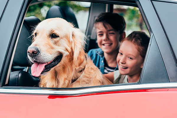car-registration.org blog: How to Make Your Vehicle Pet-Friendly According to Car-Registration.org
