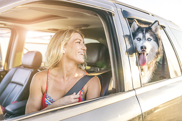 carregistrationadvisors.org blog: Why CarRegistrationAdvisors.org Believes Dogs Are Better Driving Companions Than Cats