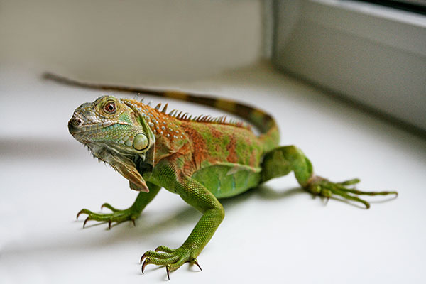 MovingAddresses.org Tips for Planning a Move With Your Exotic Pet