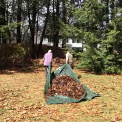 Two men pull a tarp with leaves into the woods