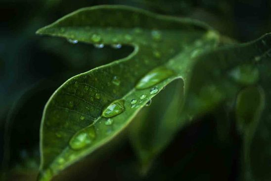 Free stock photo Close-up of water drops on fresh green leaf