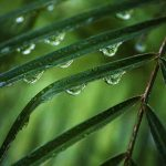 Free stock photo Close-up of water drops on leaves