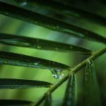 Free stock photo Close-up of water drop dripping from leaf