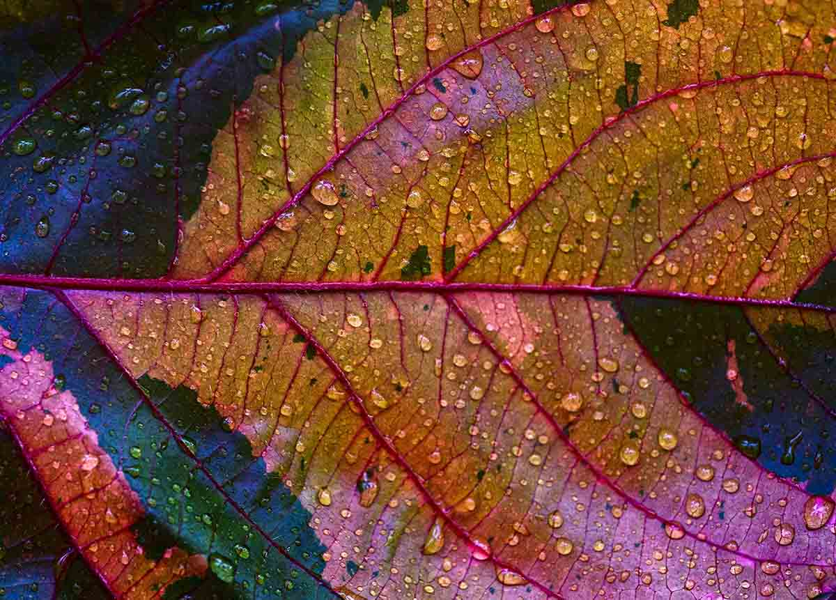 Free stock photo Close-up of water drops on multi colored leaf