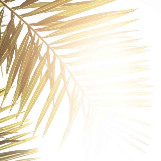 Free stock photo Silhouette palm leaves against bright sky