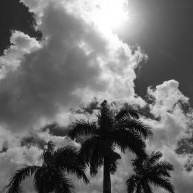 Low angle view of palm trees against sky during summer