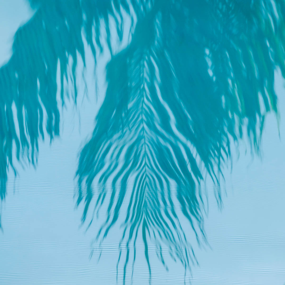 Free stock photo Reflection of palm leaves in water
