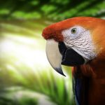 Free stock photo Close-up of scarlet macaw