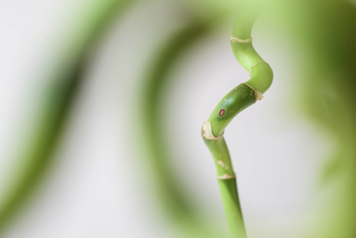 Free stock photo Close-up of green bamboo plant stem