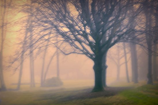 Free stock photo Defocused image of bare tree in foggy weather during sunset
