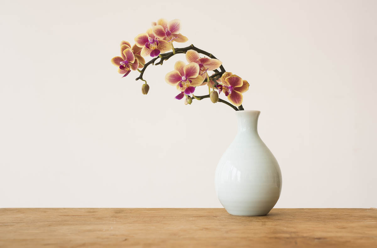 Free stock photo Orchids in vase on table against wall