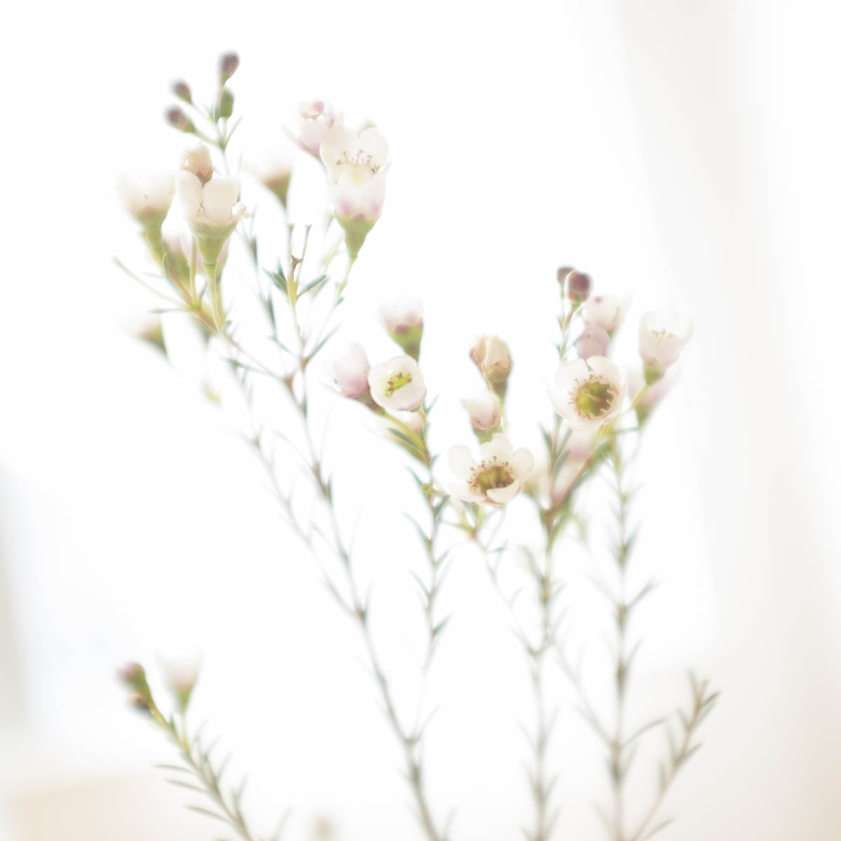 Free stock photo Fresh flowers blooming against sky