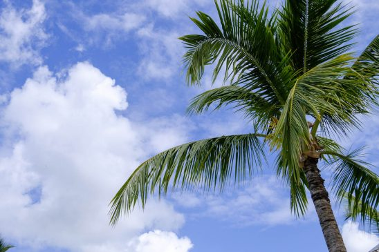 Free stock photo Low angle view of palm tree against cloudy sky