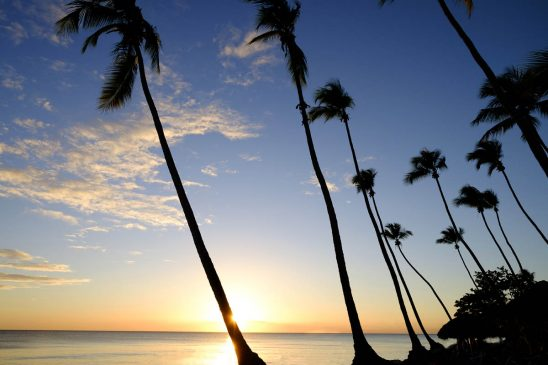 Free stock photo Silhouette palm trees by sea against sky during sunset
