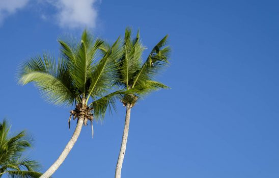 Free stock photo Low angle view of palm trees against sky