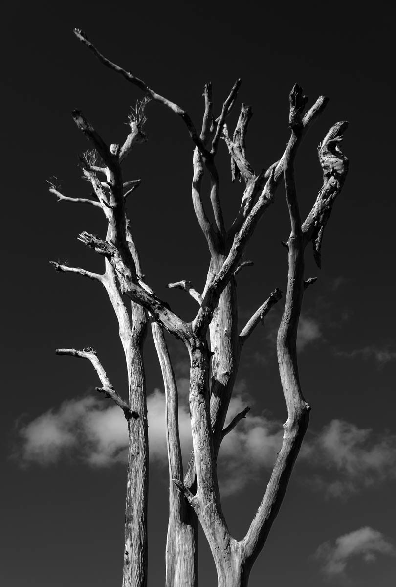 Free stock photo Low angle view of dead trees against sky