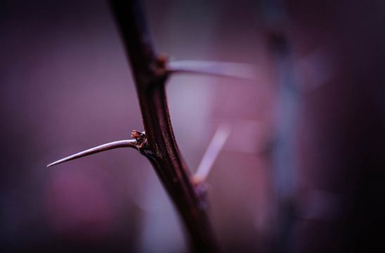 Free stock photo Close-up of thorn on branch