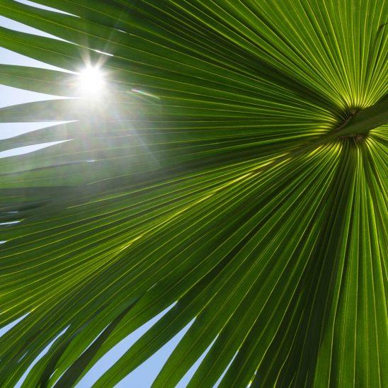 Free stock photo Low angle close-up of fresh palm leaf