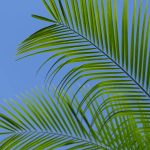 Free stock photo Low angle close-up of fresh palm leaves against sky