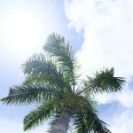 Free stock photo Low angle view of palm tree against sky on sunny day