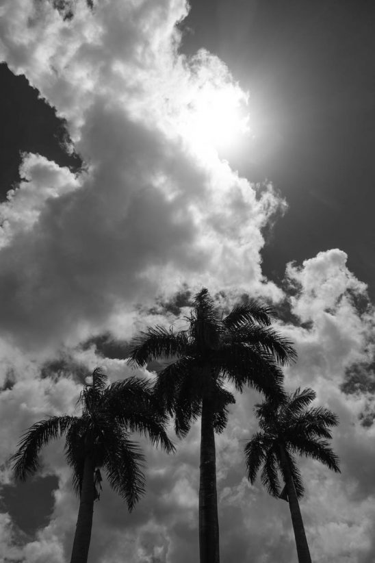 Free stock photo Low angle view of palm trees against sky during summer