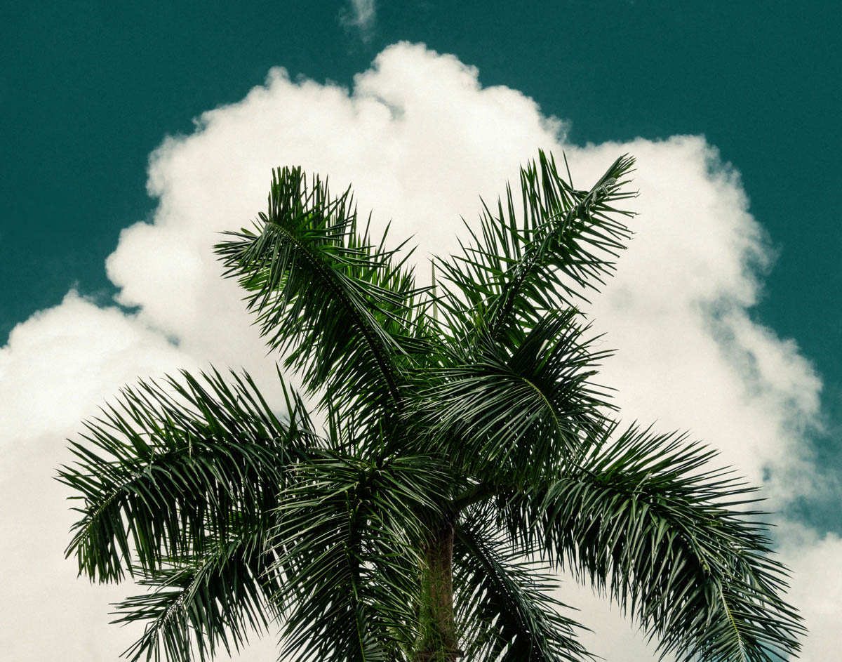 Free stock photo Low angle close-up of palm tree against sky