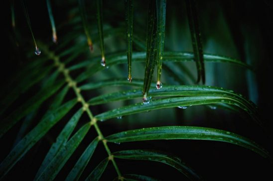 Free stock photo Close-up of water drops dripping from leaves