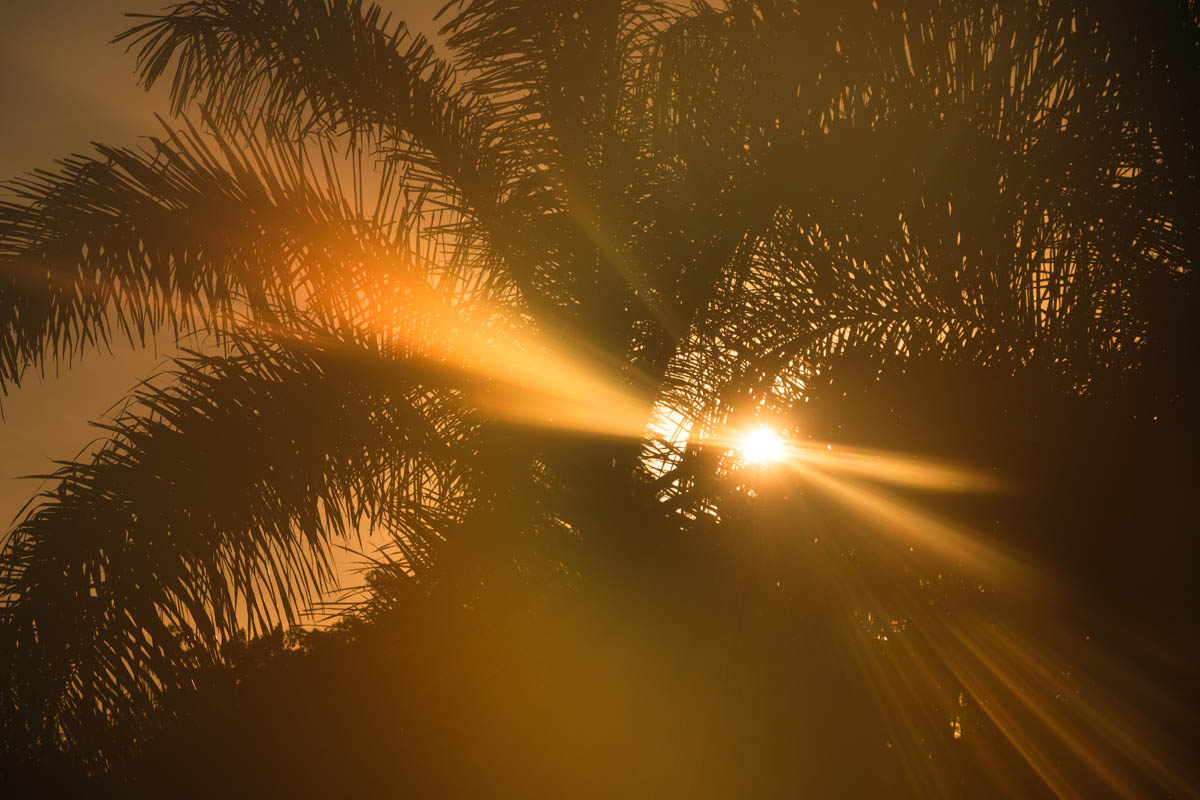 Free stock photo Low angle view of sunlight streaming through silhouette palm trees
