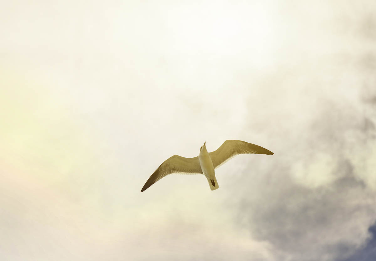 Free stock photo Low angle view of seagull flying against cloudy sky