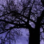 Free stock photo Low angle view of silhouette tree at night