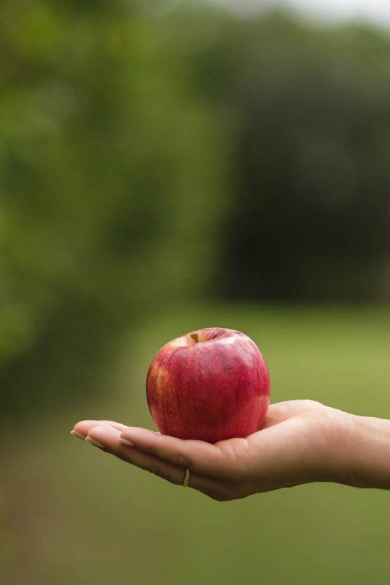 Free stock photo Close-up of hand holding red apple