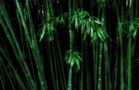 Free stock photo Full frame shot of bamboo plants