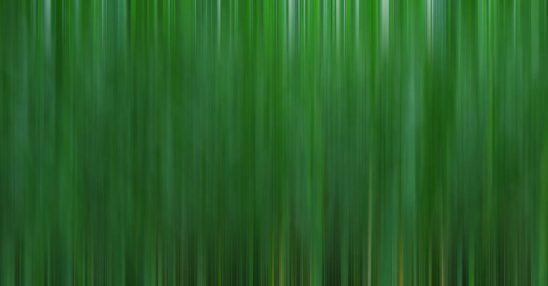 Free stock photo Defocused image of green plants