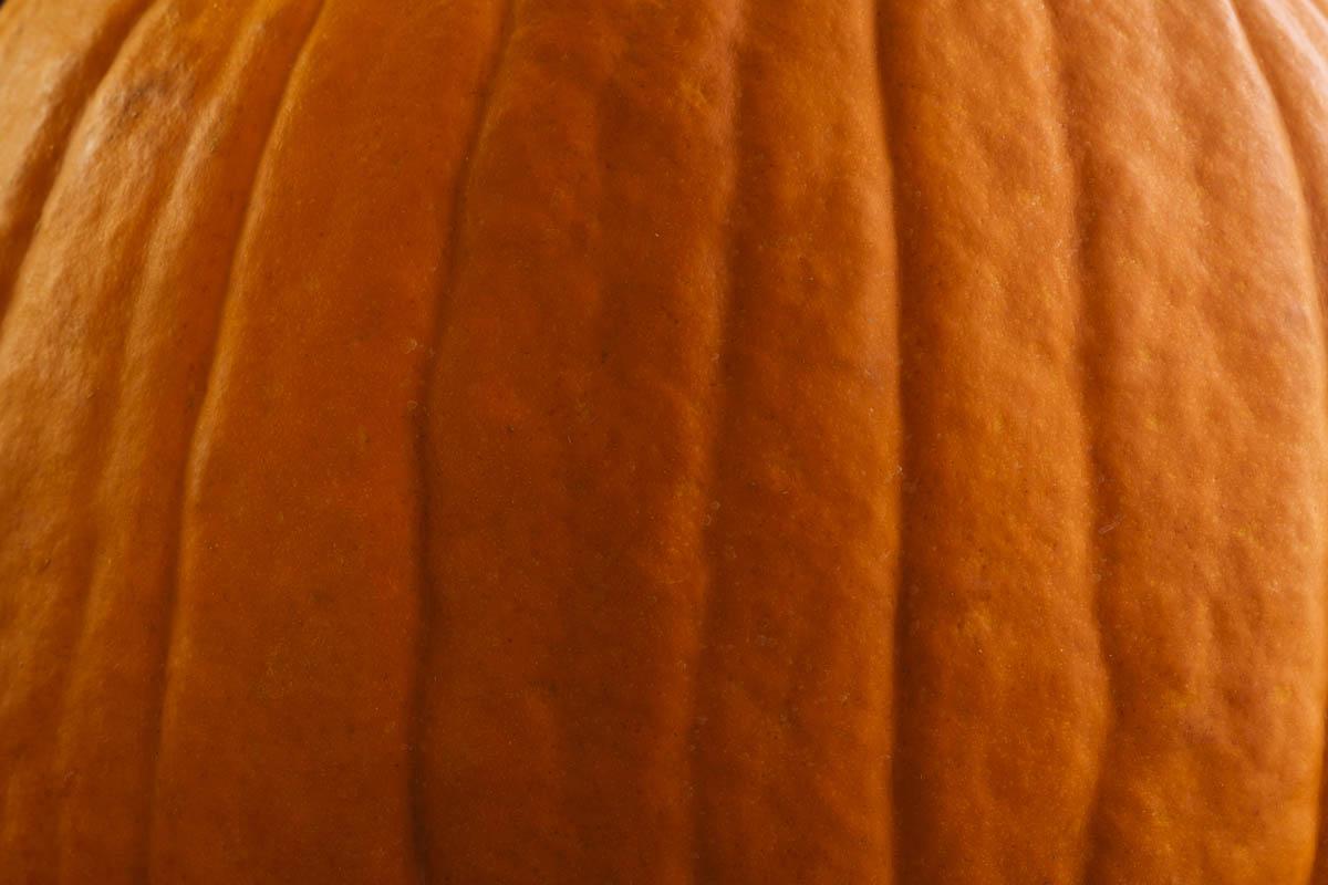 Free stock photo Close-up of pumpkin