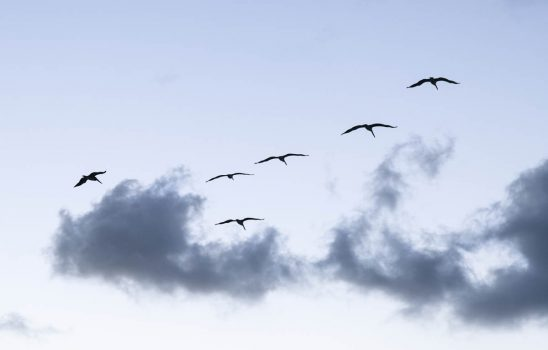 Free stock photo Low angle view of birds flying against sky