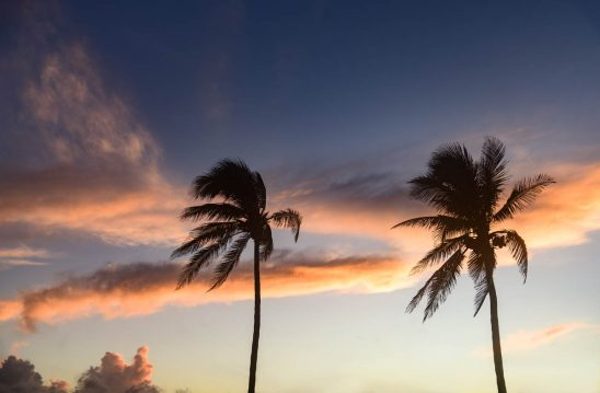 Free stock photo Low angle view of silhouette palm trees against sky during sunset