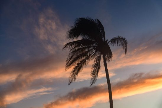 Free stock photo Low angle view of silhouette palm tree against sky during sunset