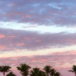 Free stock photo Line of palm trees against the Florida sky
