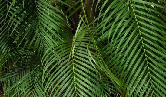 Free stock photo Lush tropical background of palm leaves