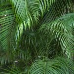 Free stock photo Palm leave in a tropical forest