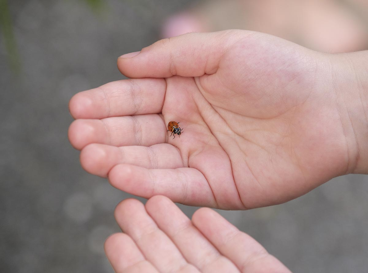 Free stock photo Close up of child's hand with a lady bug