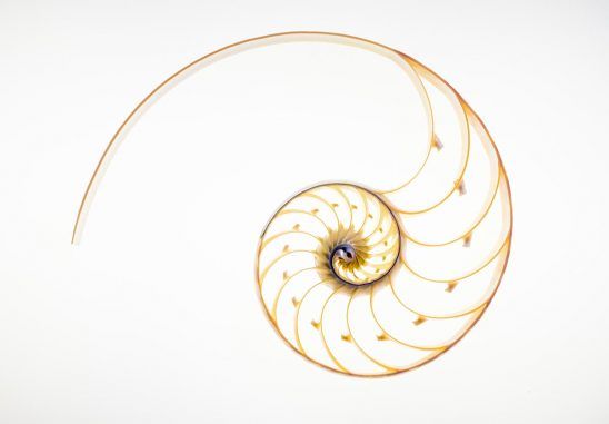 Free stock photo Cross-section of a Nautilus shell