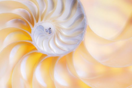 Free stock photo Close up of the interior of a nautilus shell