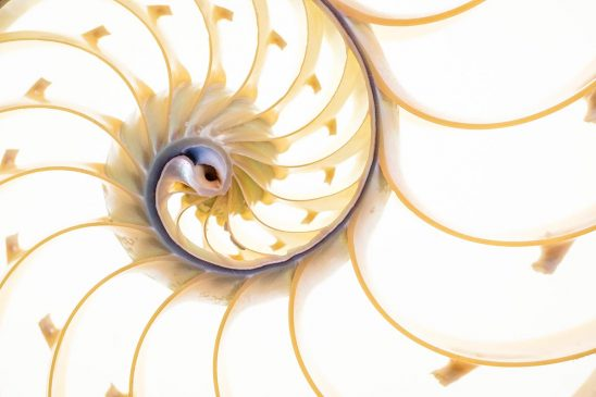 Free stock photo Close up of the mid section of a nautilus shell