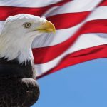 Free stock photo Eagle with the American flag
