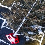 Free stock photo High angle view of bare Christmas tree on footpath