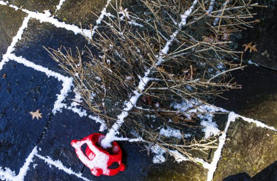 Free stock photo High angle view of bare Christmas tree on footpath
