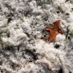 Free stock photo High angle view of dry leaf on snow