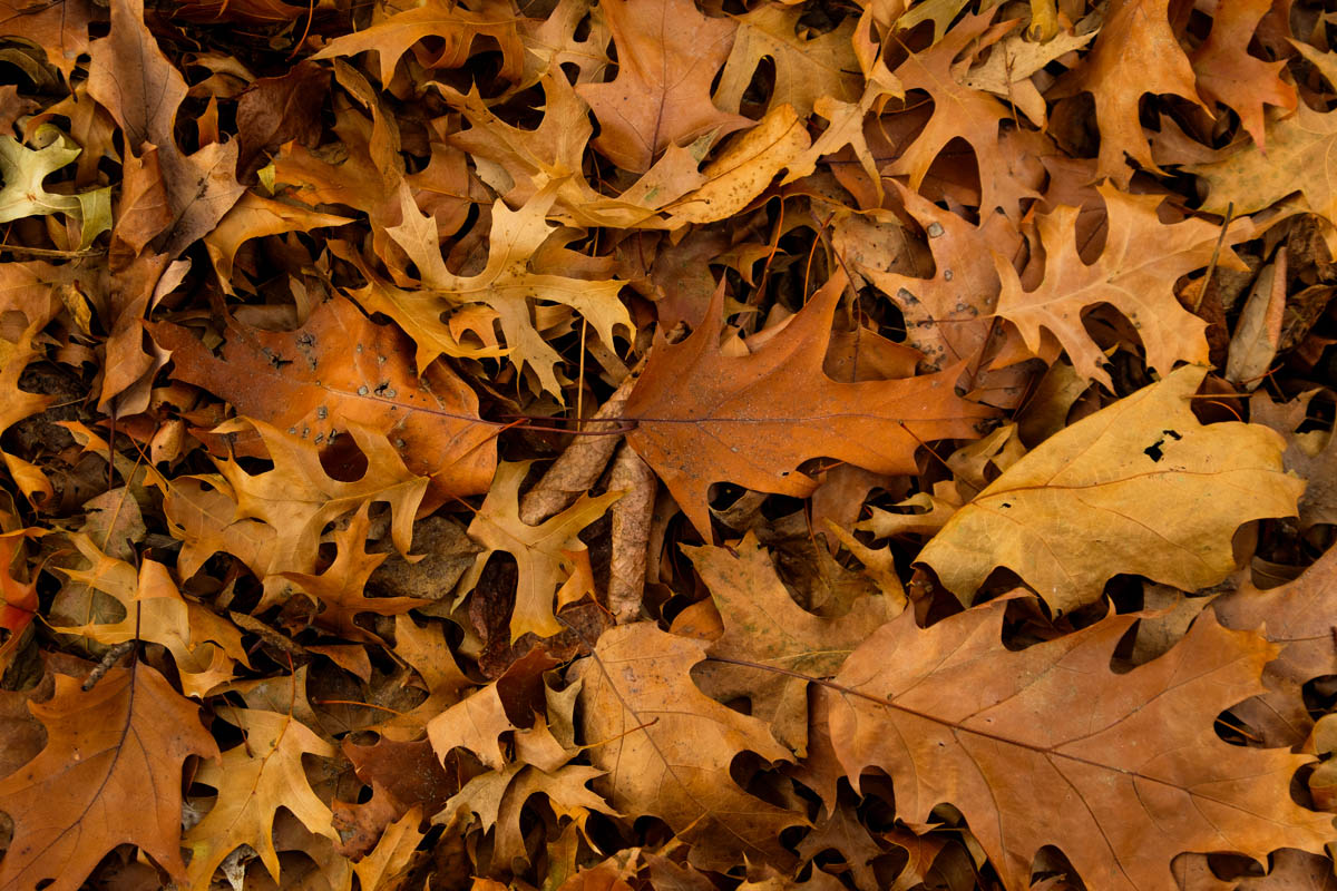 Free stock photo Full frame shot of autumn leaves